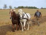 Egal, ob Maschine oder <br/>Pferd: Feldarbeit, ...